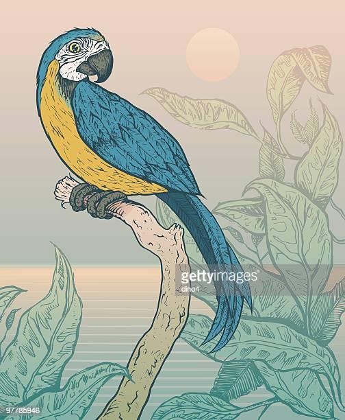 Ara macao bleu, perché sur branche dans la Jungle