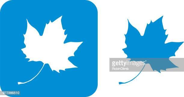 blue maple leaf icons - maple leaf stock illustrations