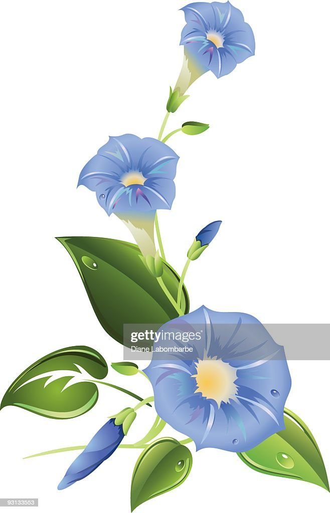 Blue Morning Glories Corner Illustration With Copy Space on white