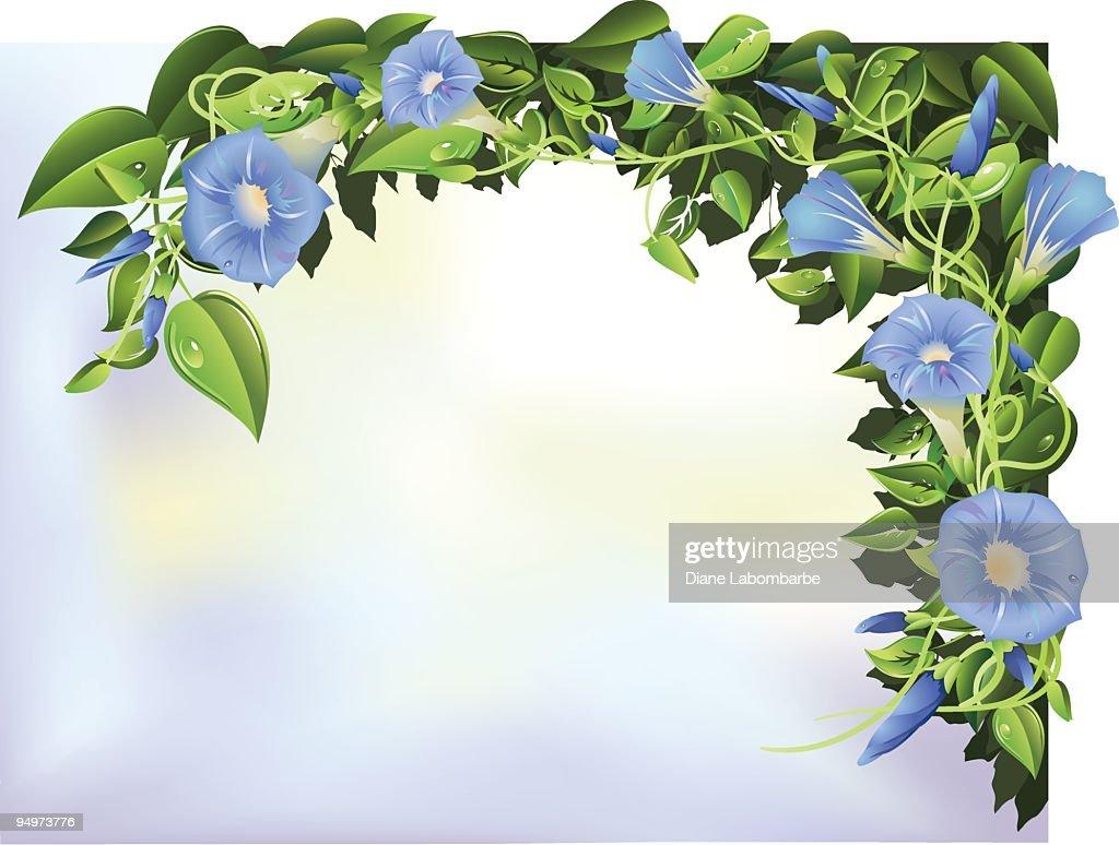 Blue Morning Glories Illustration