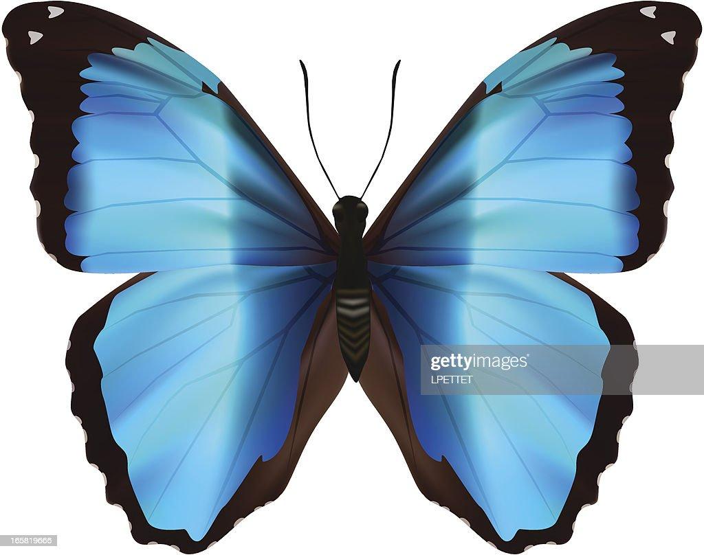 Blue Morpho Deidamia - Vector Illustration