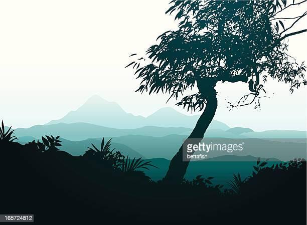 blue mountains - eucalyptus tree stock illustrations