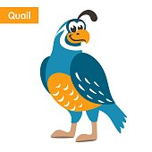Blue quail with a yellow beak on a white background.