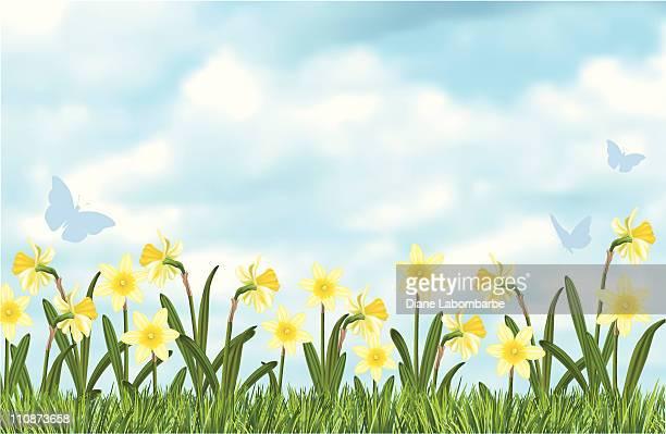 blue sky daffodils border - daffodil stock illustrations, clip art, cartoons, & icons