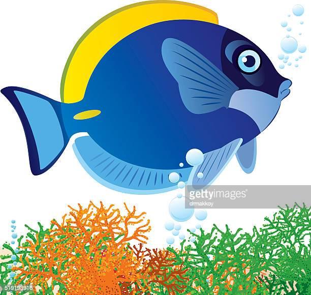 blue surgeonfish - acanthuridae stock illustrations, clip art, cartoons, & icons