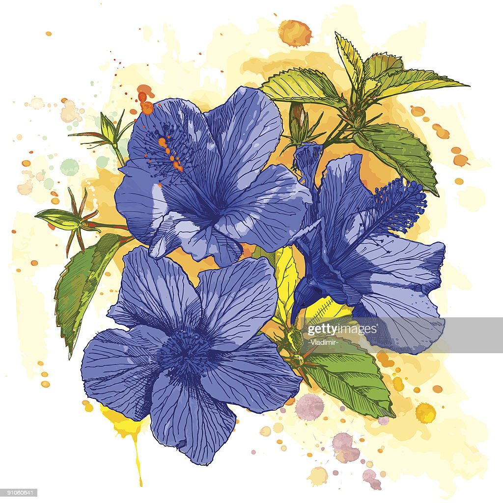 Blue Tropical Flower Hibiscus Vector Art Getty Images
