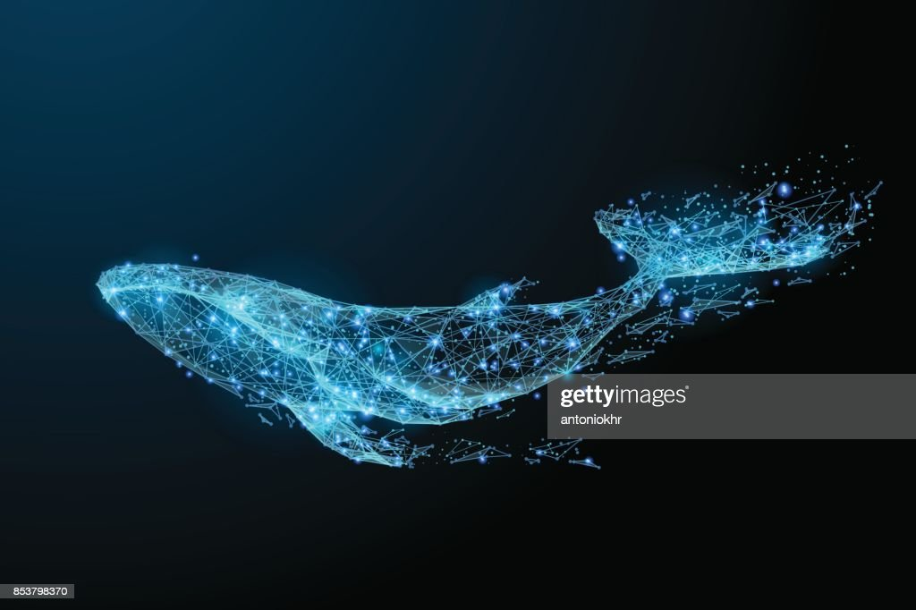 blue whale low poly blue