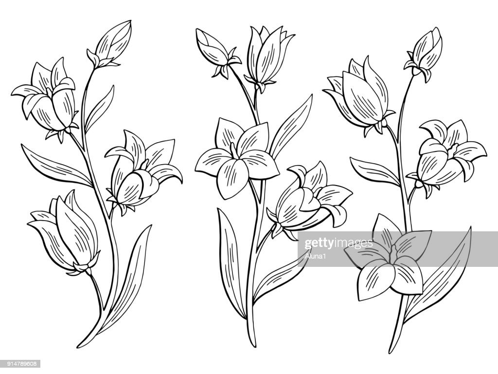 Bluebell flower graphic black white isolated sketch set illustration vector