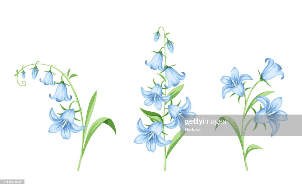 Bluebell flowers. Vector illustration.