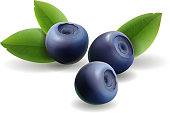 Blueberry, leaves and forest berries isolated. Realistic icon. Vector illustration