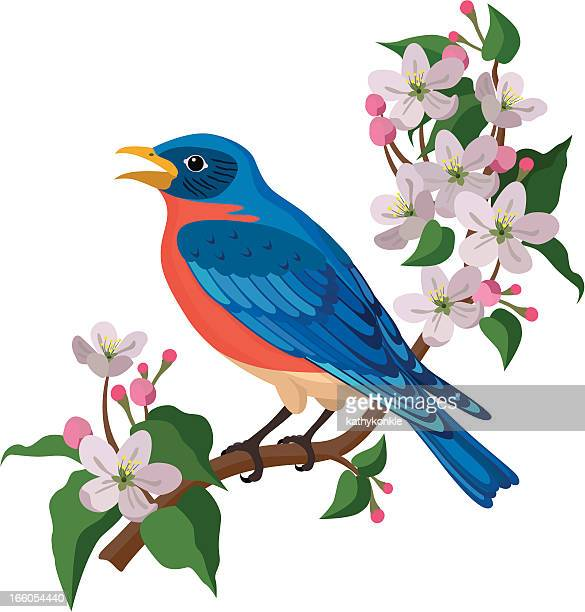 bluebird and apple blossoms