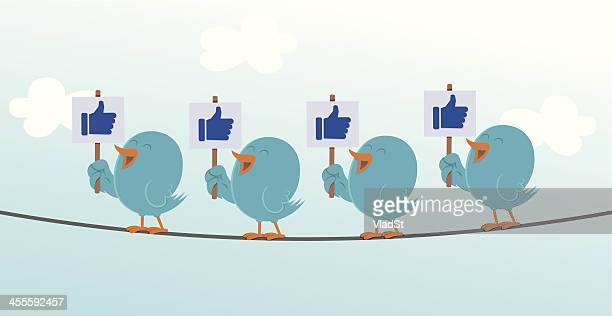 bluebirds big like