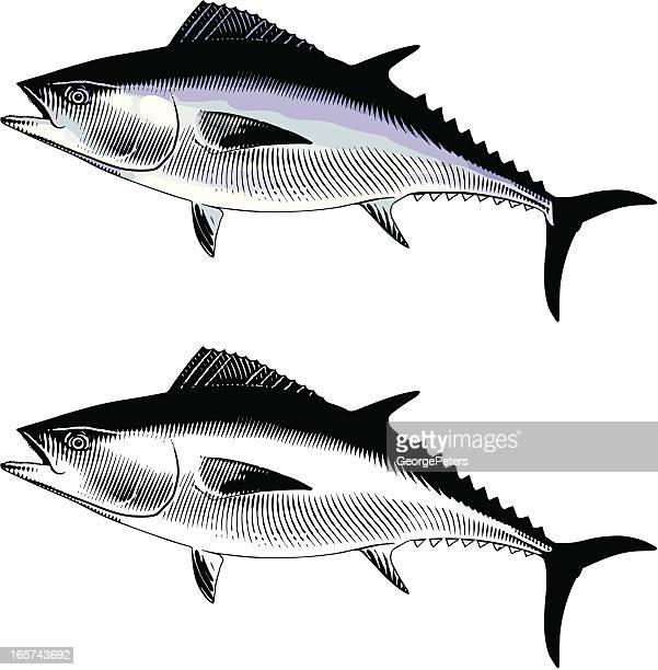 ilustraciones, imágenes clip art, dibujos animados e iconos de stock de atún azul - bonito del norte