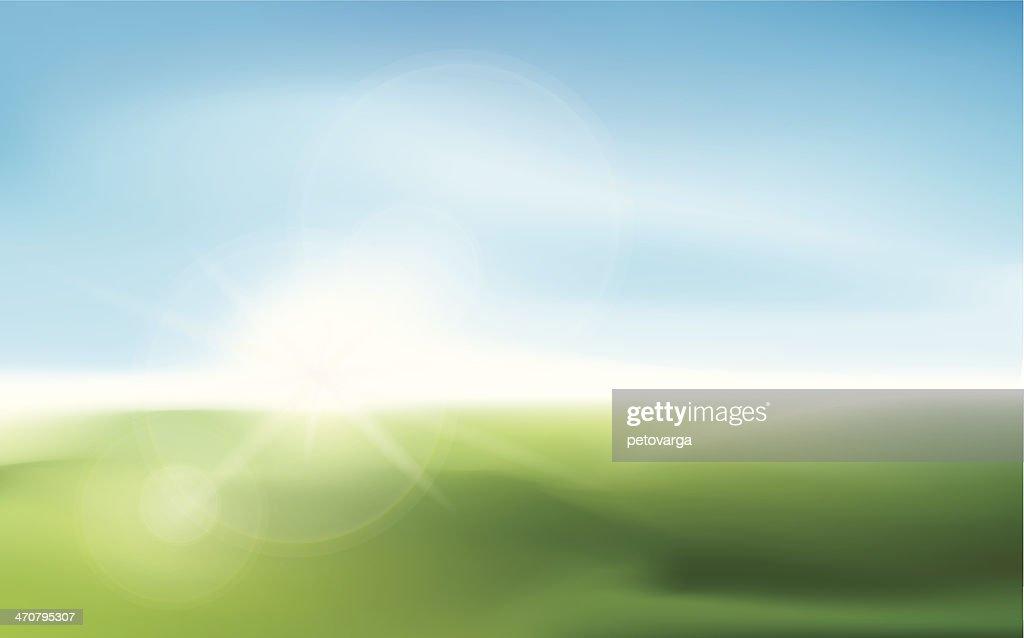 Blurry sunlight on a meadow