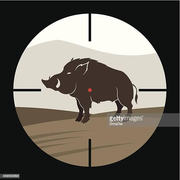Jabalíes caza
