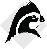 Bobwhite quail head