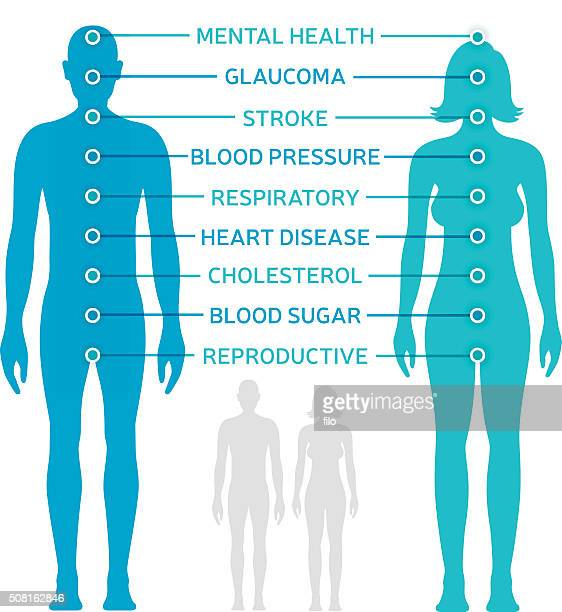 body health diagram - the human body stock illustrations
