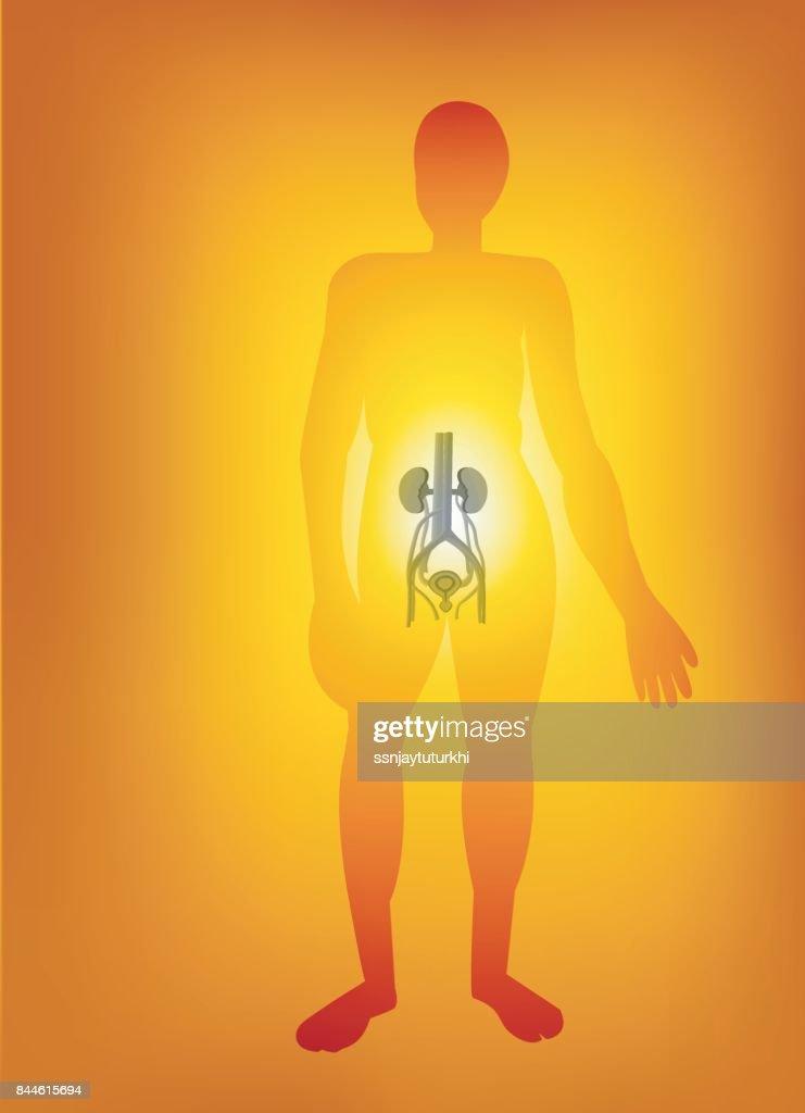 Körperteile Vektorgrafik | Getty Images