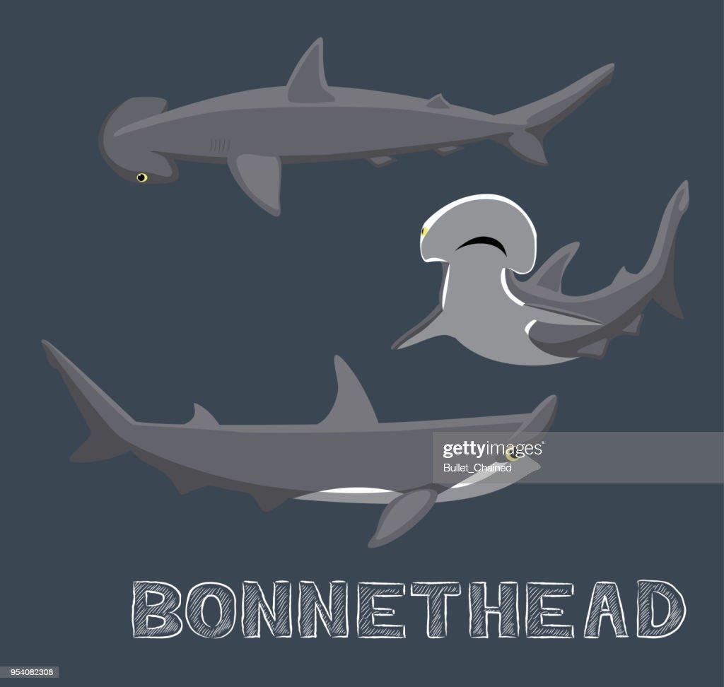 Bonnethead Shark Cartoon Vector Illustration