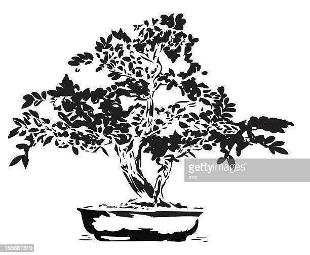 bonsai illustration in black lines - bonsai tree stock illustrations