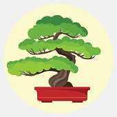 Bonsai pine decorative small tree growing in container vector illustration