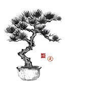 Bonsai pine tree hand hand-drawn with ink