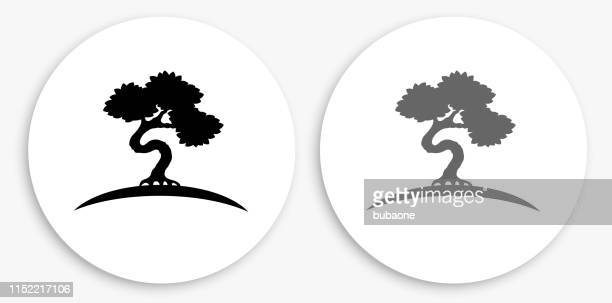 340 Bonsai Tree High Res Illustrations Getty Images