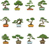 Bonsai Tree Icons