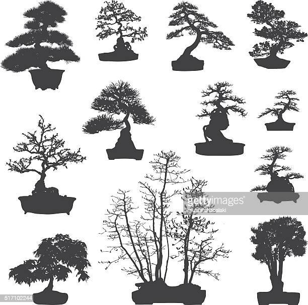 bonsai tree silhouettes set - bonsai tree stock illustrations