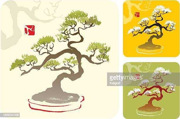 bonsai tree - bonsai tree stock illustrations