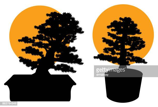 bonsai tree - shikoku stock illustrations, clip art, cartoons, & icons
