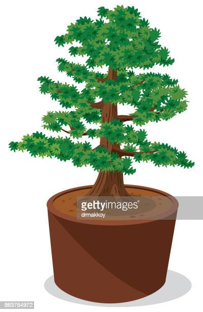 bonsai tree - hokkaido stock illustrations, clip art, cartoons, & icons