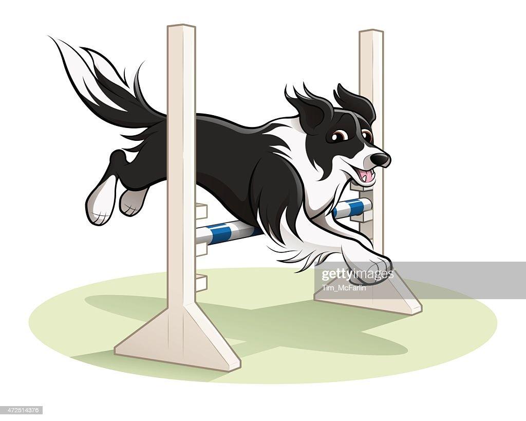 Border Collie Dog Jumping over agility jump