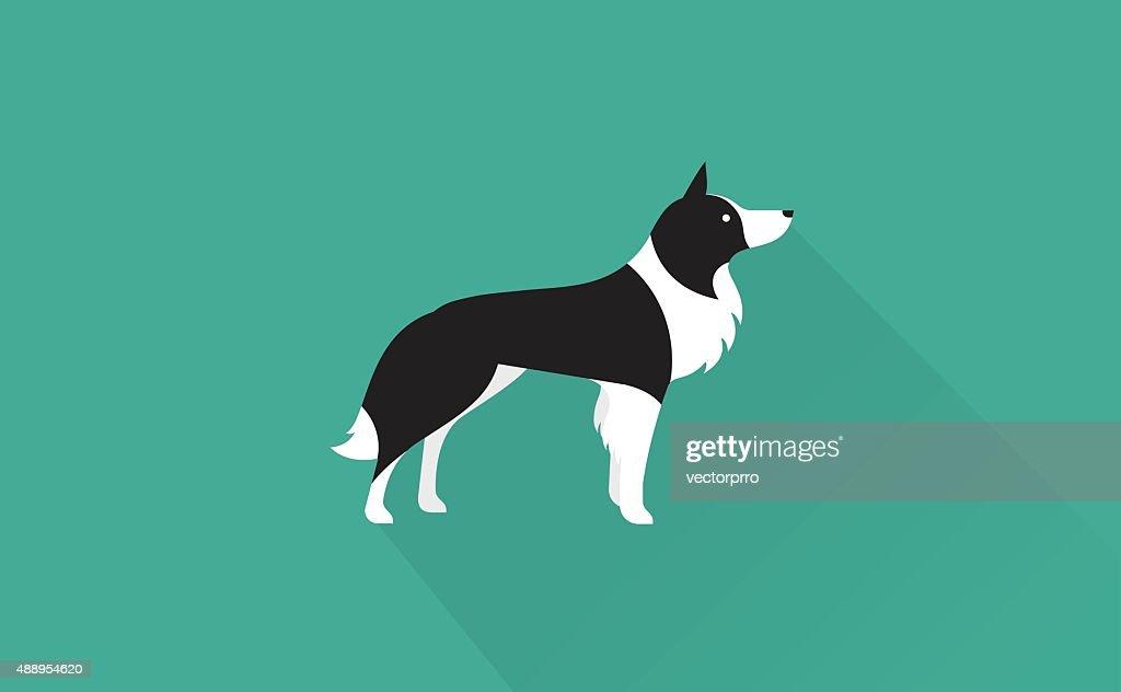 border collie icon