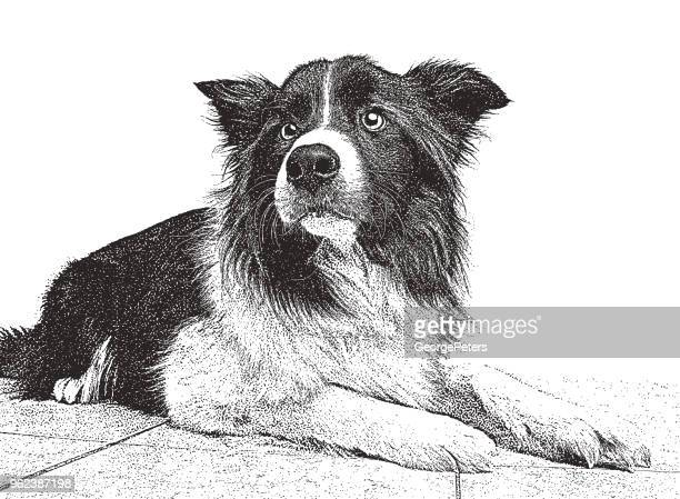border collieのイラスト素材と絵 getty images