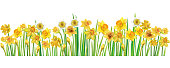 Border with multicolor vector daffodilses