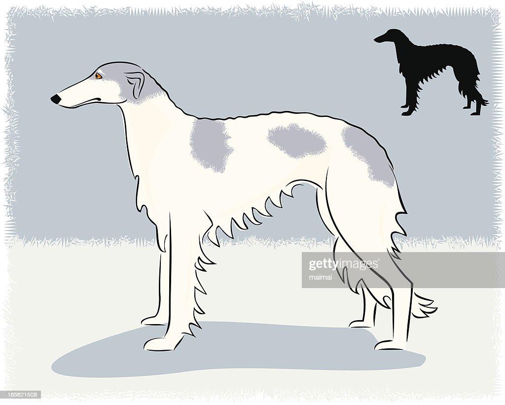 Borzoi - Russian Wolfhound