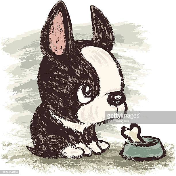 boston terrier and meal - boston terrier stock illustrations