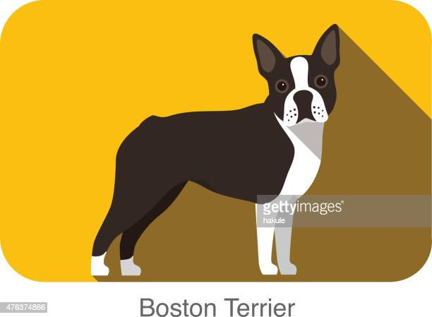 Boston Terrier, dog standing flat icon design