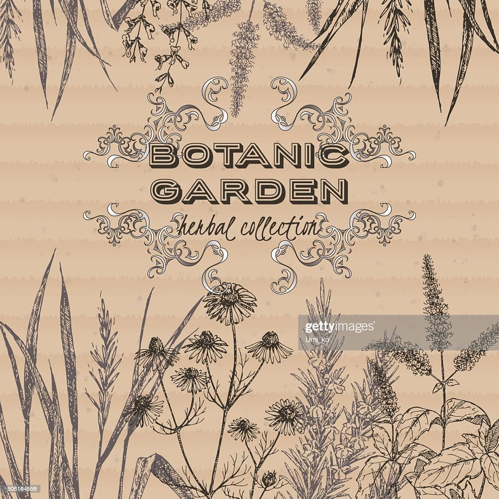 Botanic garden herbal tea label on cardboard background.