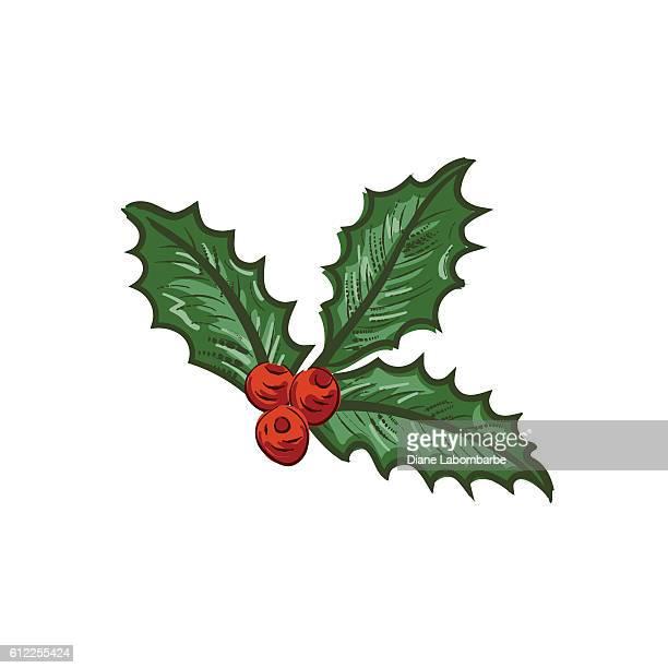 illustrations, cliparts, dessins animés et icônes de botanical christmas holly ornament - houx
