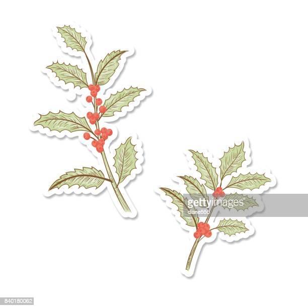 ilustraciones, imágenes clip art, dibujos animados e iconos de stock de etiqueta engomada de acebo de navidad botánico - flor de pascua