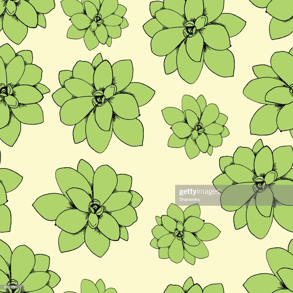 Botanical illustration of succulent rosette plant Echeveria. Seamless pattern vector clip art on a yellow background