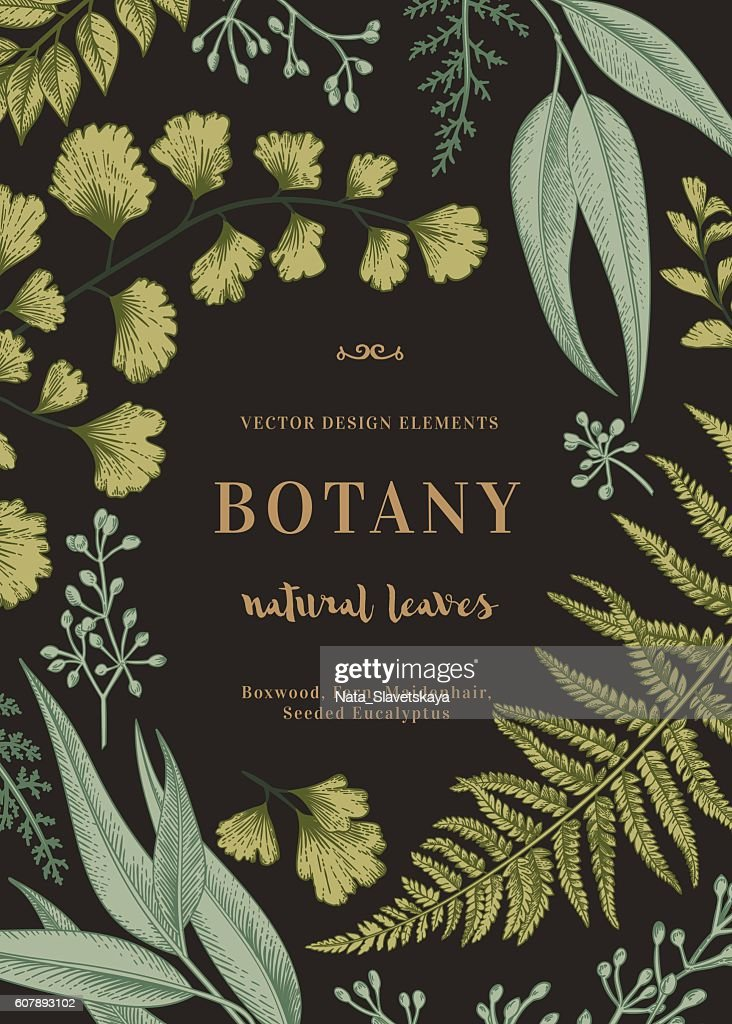 Botanical illustration with leaves.