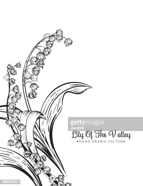 Lily Of The Valley Vector Art And Graphics