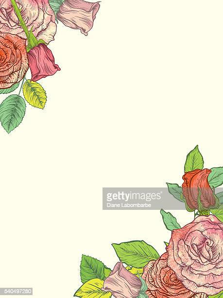 botanical roses in top left corner and bottom right - rose petals stock illustrations, clip art, cartoons, & icons