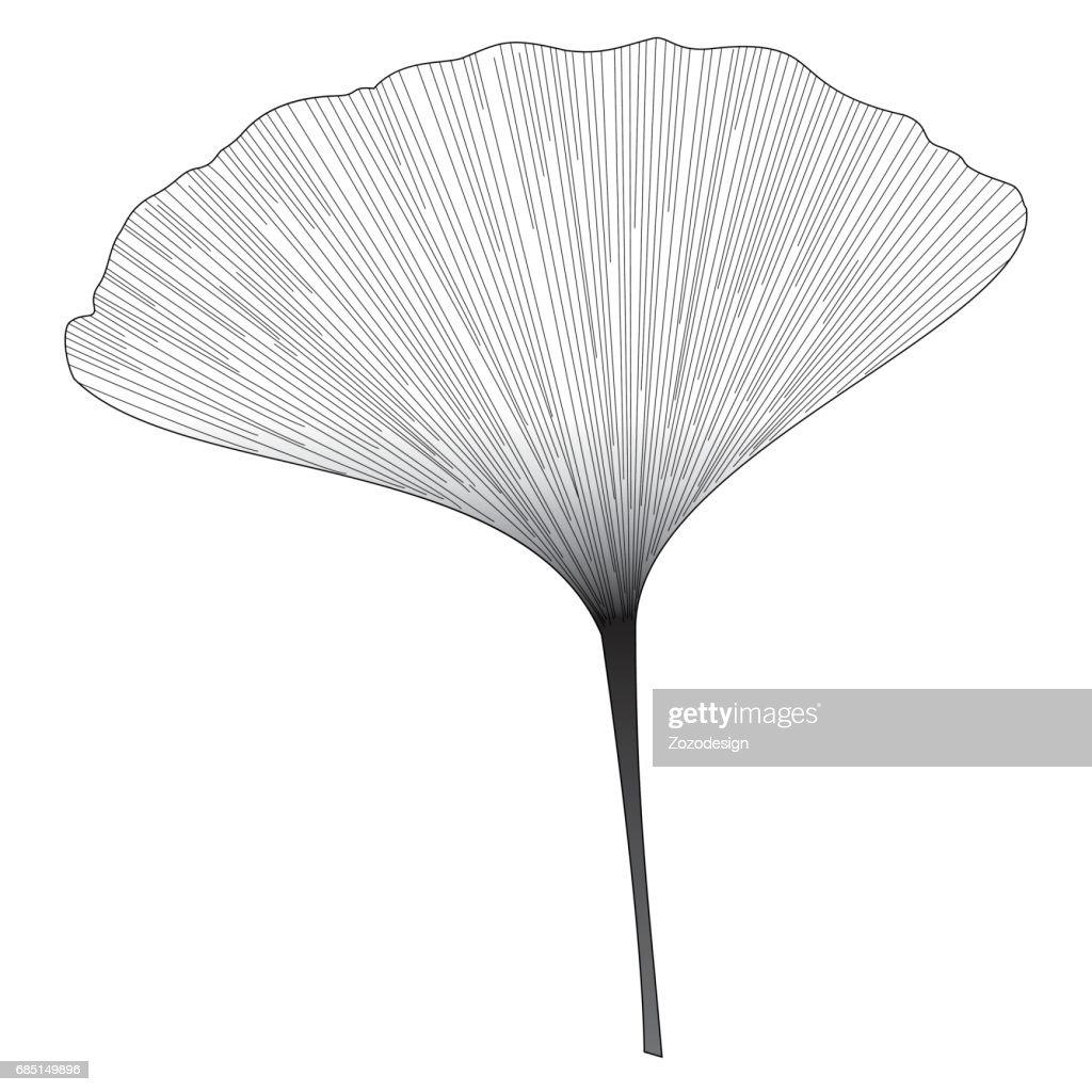 Botanical series Elegant Ginkgo leaf in sketch style in black and white on black background