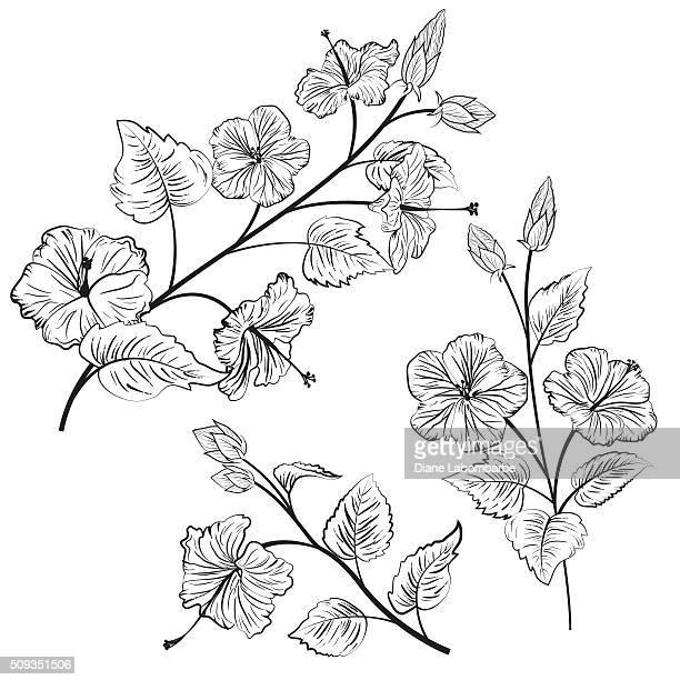illustrations, cliparts, dessins animés et icônes de botanique style illustration de fleurs d'hibiscus - hibiscus