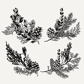 Botanical vintage evergreen bouquet set. Hand drawn Christmas illustration with pine, cone, coniferous branches.