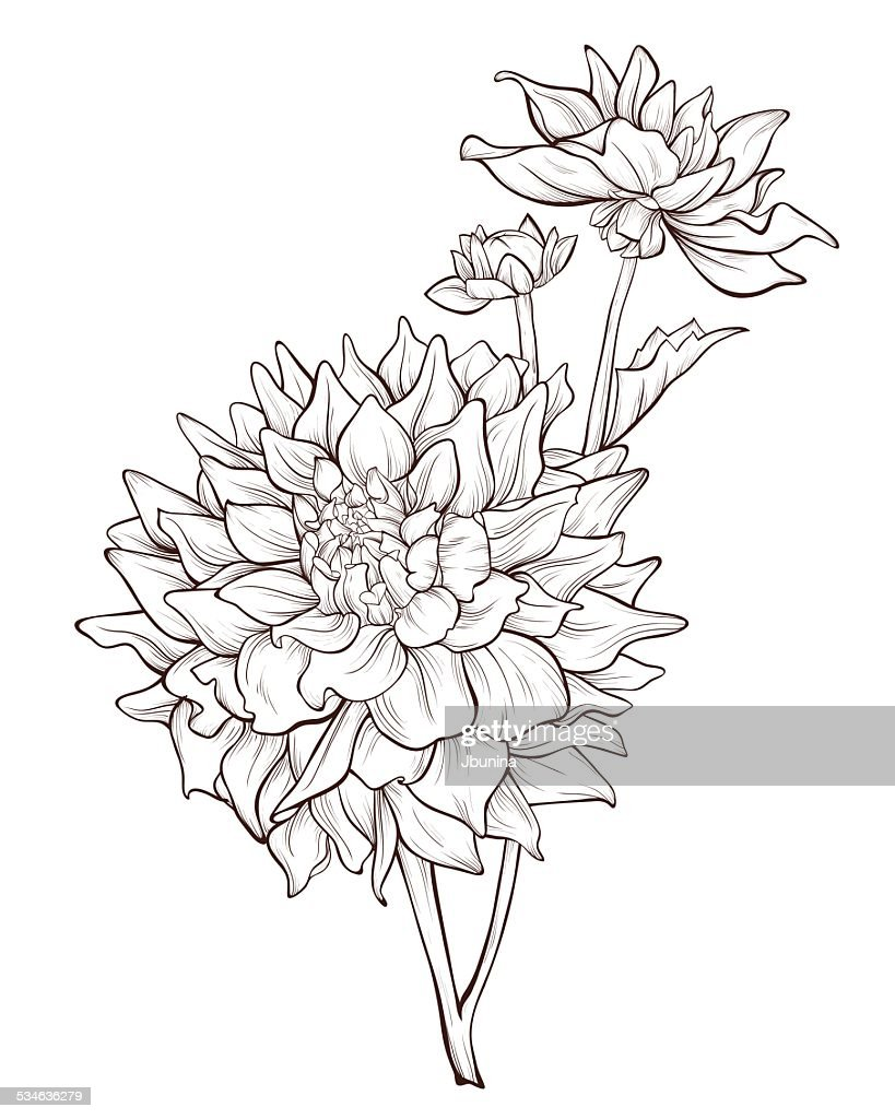 Bouquet of dahlia flowers isolated .